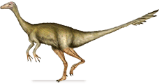 archaeornithomimus.png